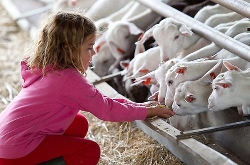 Beneficios de visitar una granja escuela para los niños