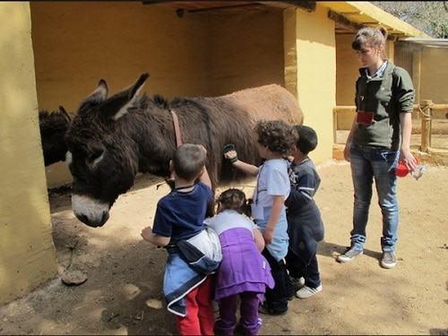 cuidado de animales en granja escuela
