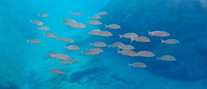 fauna marina cabo de gata