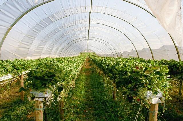 Invernaderos de Almería desde el espacio