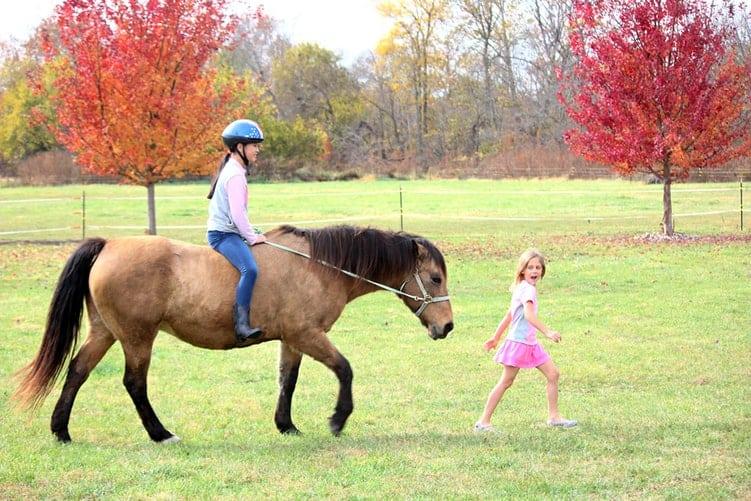 niños usando caballo